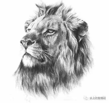 狮子动物素描头像