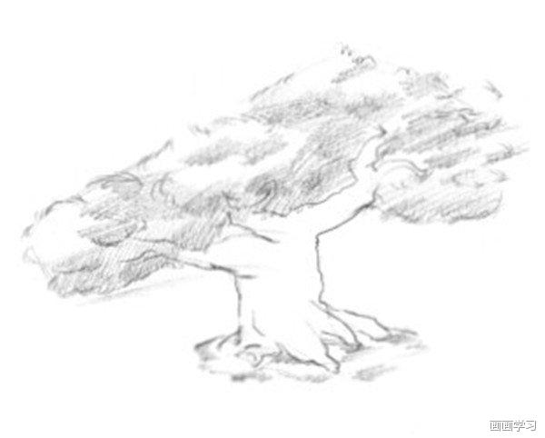 如何学素描 素描松树的绘画教程
